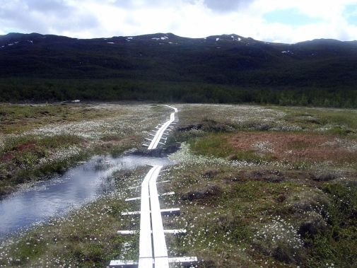 Boardwalk collapses into a thermokarst thaw feature at Stordalen Mire. Photo credit: Patrick Crill.