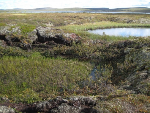 Collapsed peatland when permafrost thaws, Tavvavuoma in northern Sweden. Photo: Britta Sannel.