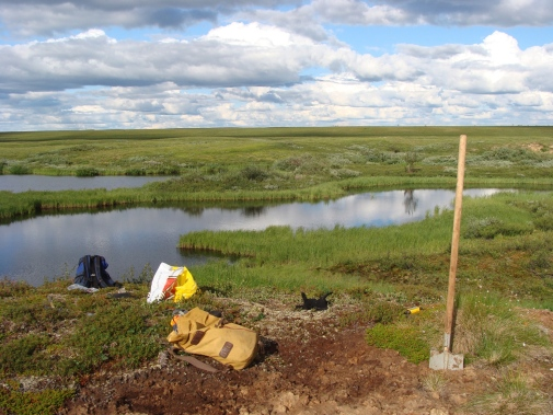 Sampling soils next to thermokarst lakes forming as permafrost thaws in a Russian peatland area