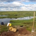 Sampling soils next to thermokarst lakes forming as permafrost thaws in a Russian peatland area. Photo: Gustaf Hugelius.